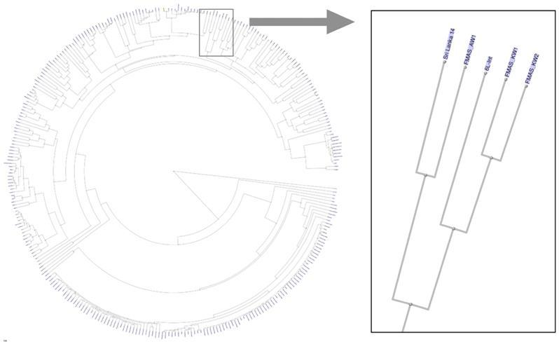 Complete Genome Sequence of Leptospira interrogans Strains